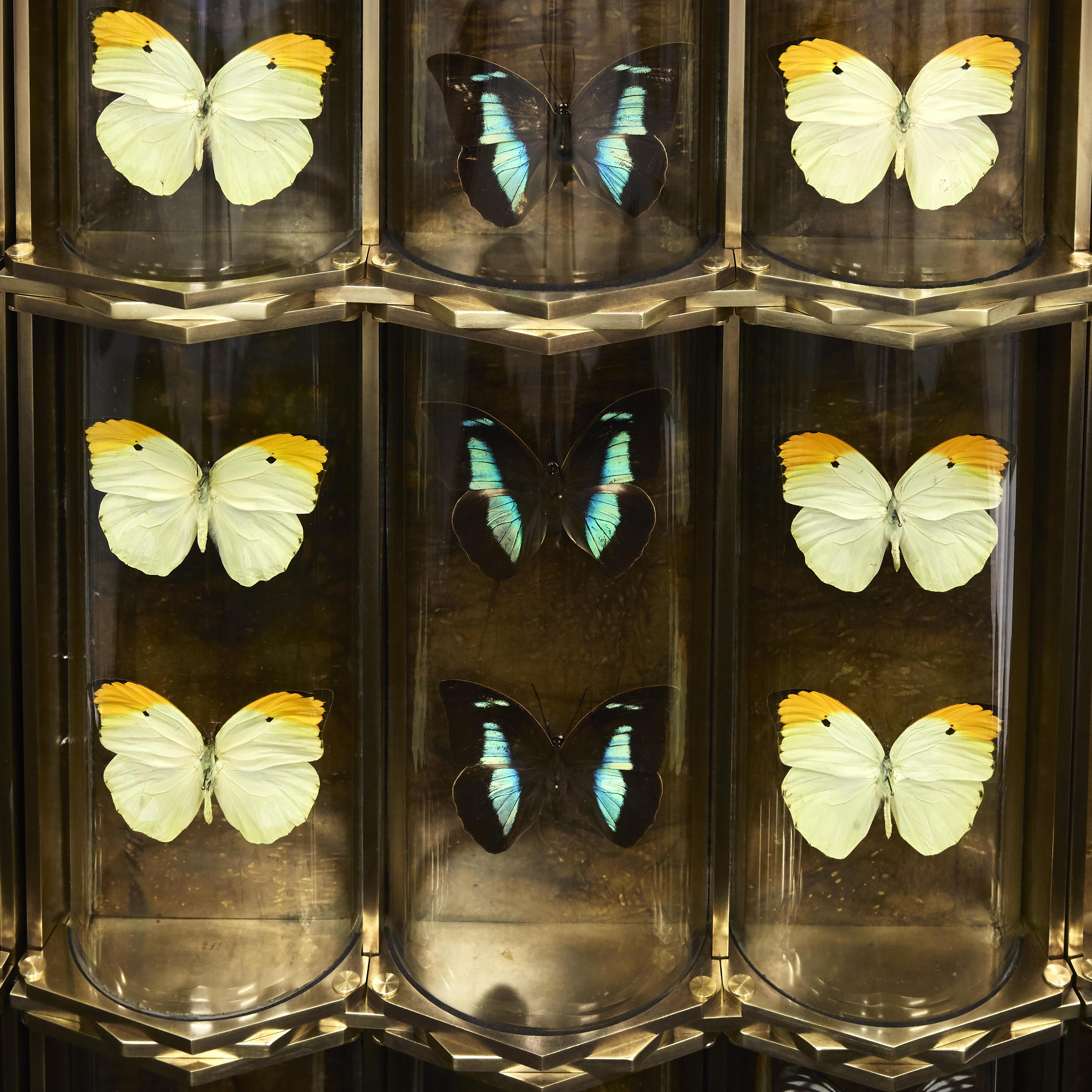 Erwan BOULLOUD Cabinet de Curiosités